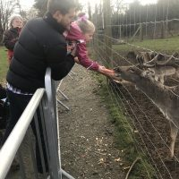 Feeding the deer at Weald Country Park